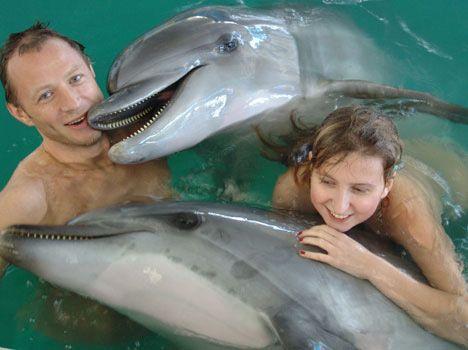 hurghada delfinschwimmen
