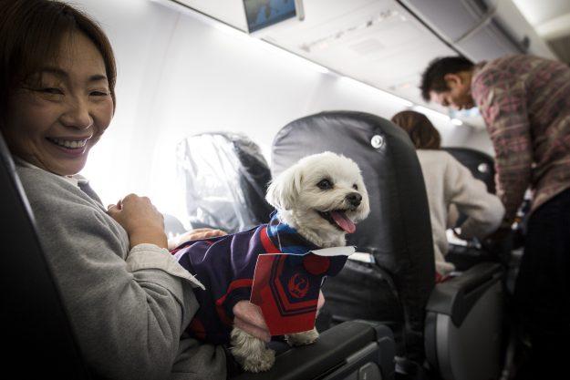 Der Flug mit Hund in Ägypten