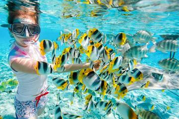 Beste Strande fur Tauchen in Hurghada ÄgyptenAusflügeBlog